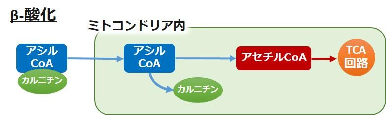 β酸化カルニチン