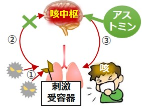 アストミン作用機序