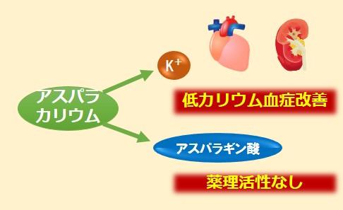 アスパラカリウム作用機序