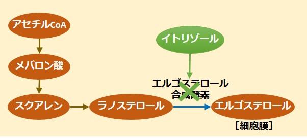 イトリゾール作用機序