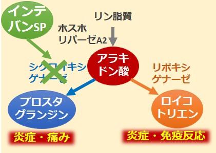 インテバンSP作用機序