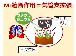 ウメクリジニウム作用機序