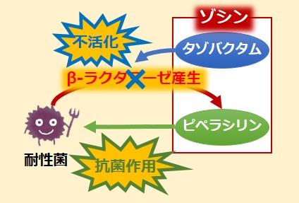 ゾシン注耐性菌