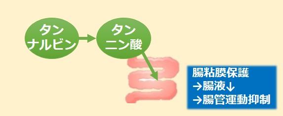 タンナルビン作用機序