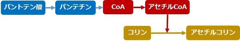 パントテン酸代謝
