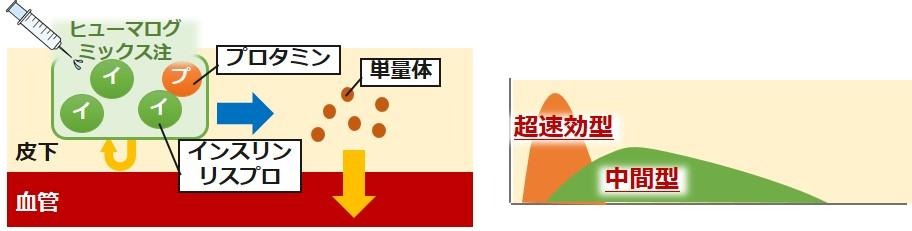 ヒューマログミックス注作用機序