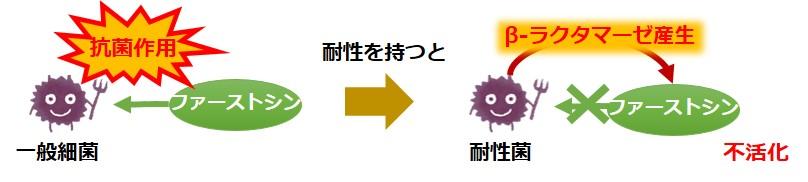 ファーストシン耐性菌
