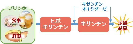 プリン体尿酸生成