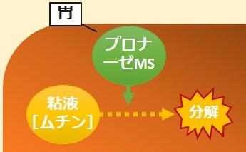 プロナーゼMS作用機序