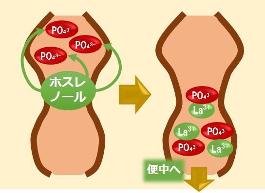 ホスレノール作用機序