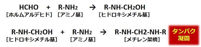 ホルマリン固定機序