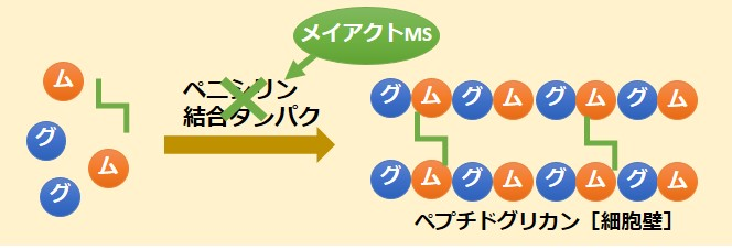 メイアクトMS作用機序