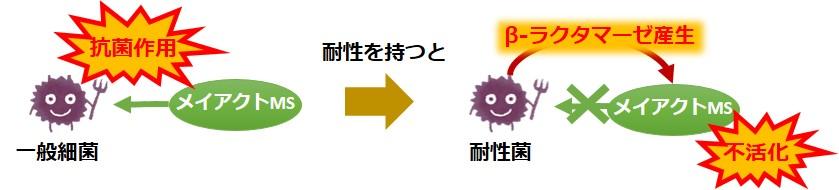 メイアクトMS耐性菌