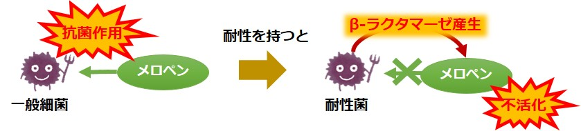 メロペン耐性菌