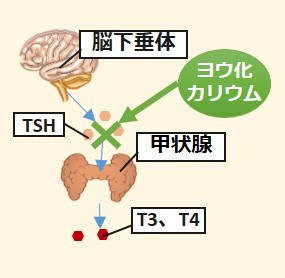 ヨウ化カリウム作用機序