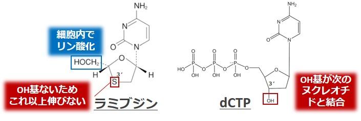 ラミブジンdcTP構造