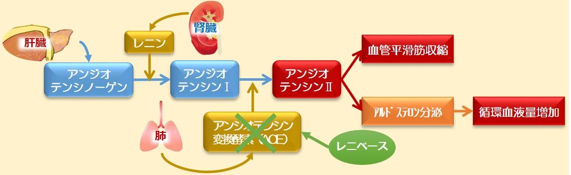 レニベース作用機序