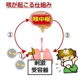 咳が起こる仕組み