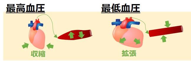 最高血圧最低血圧