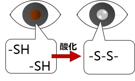 水晶体白濁SH