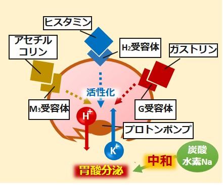炭酸水素ナトリウム作用機序