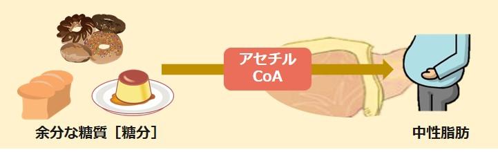 糖質脂肪酸合成