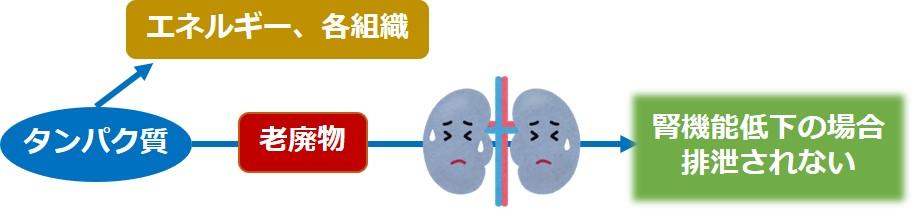 腎臓老廃物除去