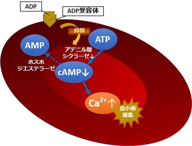 血小板ADP凝集