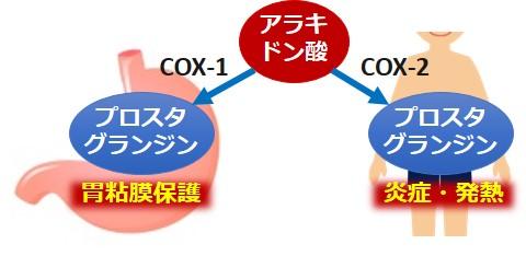 COX-1COX-2作用違い