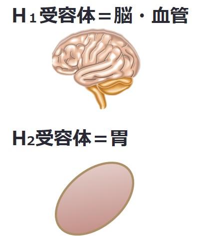 H1H2受容体