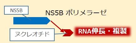 NS5Bポリメラーゼ作用
