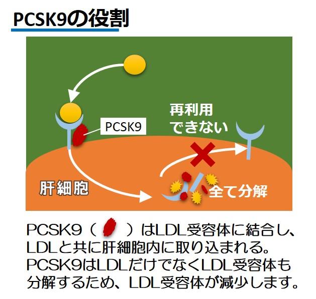 PCSK9役割