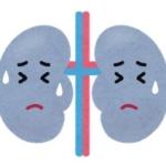 腎臓イラスト