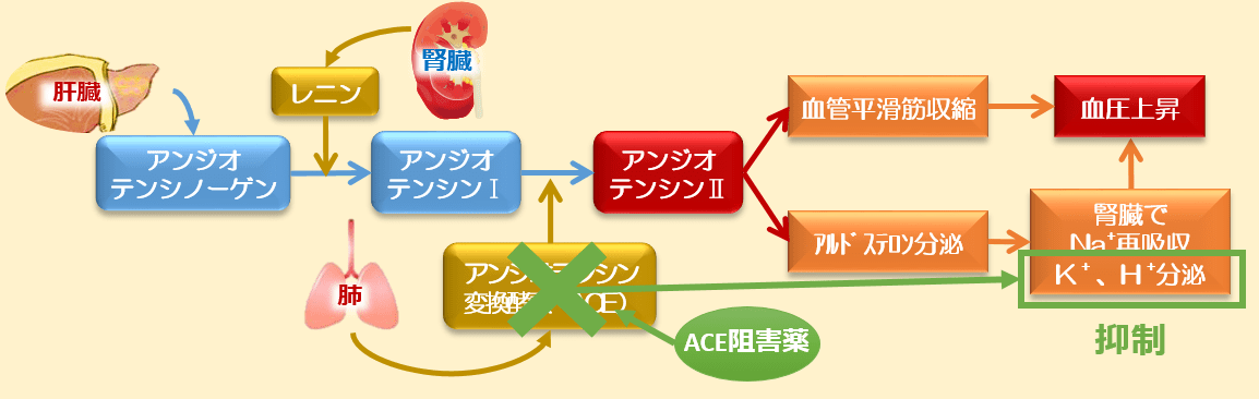 ACE阻害薬高カリウム血症